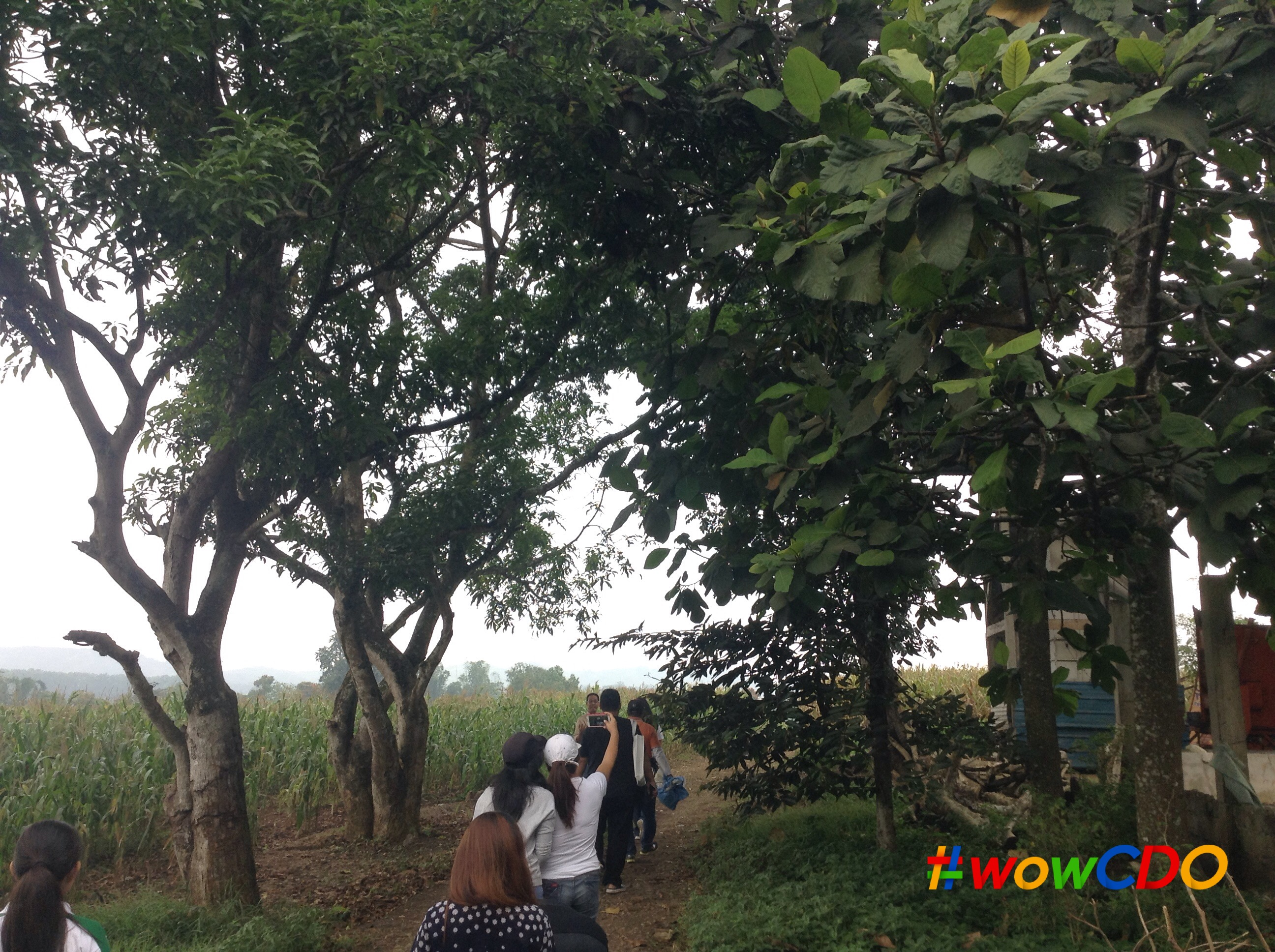 bukidnon-corn-farm-with-cdo-bloggers